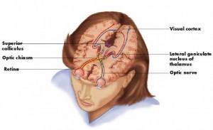 voies-oculaires